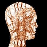 人力神经系统 库存照片