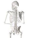 人力脊椎 免版税库存图片