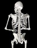 人力脊椎 免版税图库摄影