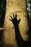 人危及的森林 免版税图库摄影