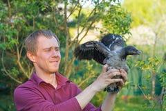 人和一只幼小戴头巾乌鸦 库存图片