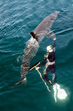 人和大白鲨鱼 免版税库存照片