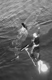人和大白鲨鱼 图库摄影