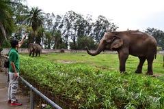 人和大象 库存照片