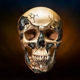 人和机器人头骨 免版税图库摄影