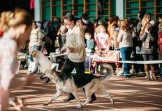 人和狗参观宫殿竞技陈列 图库摄影