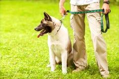 人和狗在公园 库存图片