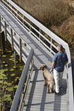人和狗在木板走道在沼泽地 免版税库存照片