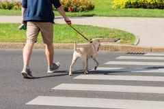 人和狗在行人交叉路的横穿路 免版税图库摄影
