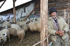 人和绵羊 免版税库存图片