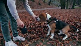 人哺养他的守纪的狗小猎犬快餐 股票视频