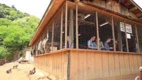 人哺养的猴子 股票录像