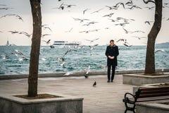 人哺养的鸟在贝希克塔什,伊斯坦布尔 免版税库存照片