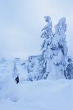 年轻人在一个多雪的森林里 免版税库存图片