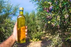 人在一个橄榄树领域保留一个瓶额外处女橄榄油在克利特,希腊 免版税库存照片