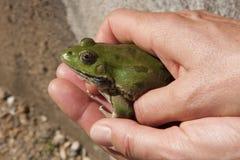 人在他的手上的拿着一只青蛙 免版税库存图片