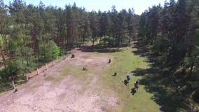 人在农场,波兰的骑乘马 股票视频
