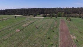 人在农场,波兰的骑乘马 股票录像