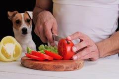 人在准备晚餐,膳食,沙拉的厨房里,与狗观看 滑稽的图象 素食人和宠物概念 免版税库存图片