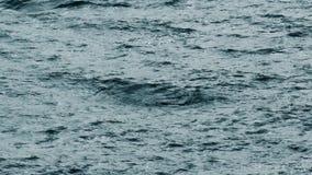 人在剧烈的海游泳过去 股票录像