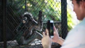 人在动物园里拍与一只小逗人喜爱的吃猴子的智能手机的一张照片 1920x1080 影视素材