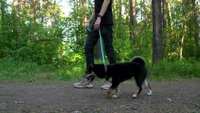 人在有狗的森林走 影视素材