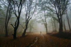 人在有雾的不可思议的被迷惑的幻想森林里 免版税图库摄影