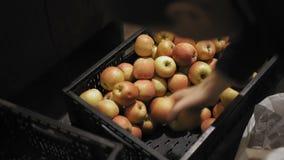 人在果子商店选择苹果 股票视频