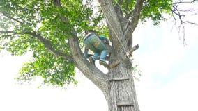 人在树爬上 股票视频