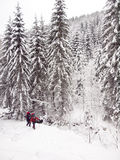 人在森林在冬天 免版税库存图片