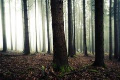 人在森林里在黎明 免版税库存照片