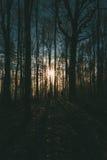 人在森林里在黎明 免版税库存图片