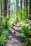 人在森林里 免版税库存图片