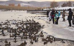 人在河的饲料鸭子 免版税库存图片