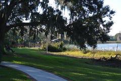 人在看池塘的柳树下 免版税库存图片