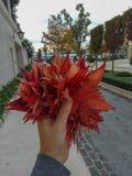 人在秋天的举行红槭事假有天空蔚蓝城市和海背景  免版税图库摄影