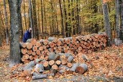 人在秋天的堆积木头 库存照片
