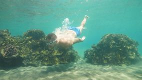 人在面具潜航并且看与珊瑚礁,水下的射击的海底 股票录像