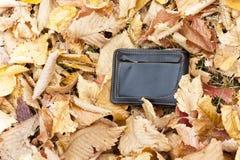 人在黄色秋叶的` s钱包 在叶子的公园是有金钱的一个钱包 钱包丢失找到男性伙伴 免版税库存图片