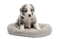 年轻人坐在小儿床的杂种小狗 免版税库存图片