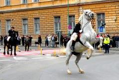 年轻人坐在街市布拉索夫的马 免版税图库摄影