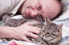 人宠爱一只苏格兰平直的灰色猫 库存照片