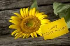 人寿保险概念用一个五颜六色的向日葵 免版税库存照片