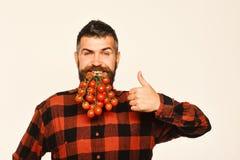 人展示有确信的面孔的收获农夫拿着小蕃茄 库存照片