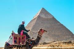 人带领一头骆驼在吉萨棉金字塔 免版税图库摄影