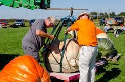 人帮助移动巨型南瓜 免版税库存图片