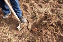 人开掘一把铁锹在庭院里 农业劳动 为菜的耕种做准备 秋天清扫 免版税库存照片