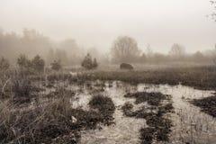 令人惊讶的12月风景 免版税库存照片
