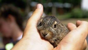 人拿着一个小狂放的蓬松婴孩兔宝宝 在棕榈的一点兔宝宝 股票录像
