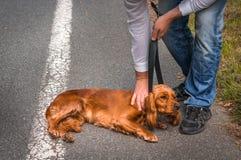 人拿着一条皮带,并且他要对扼杀狗 库存图片